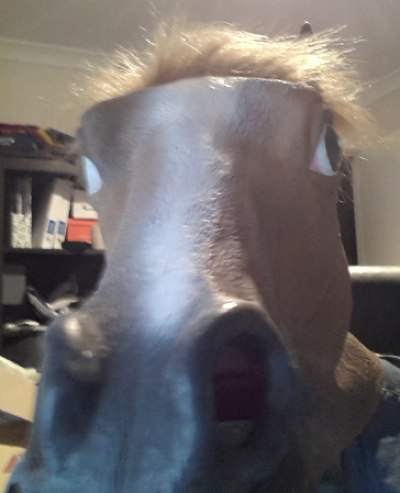 me...in a horse mask :)